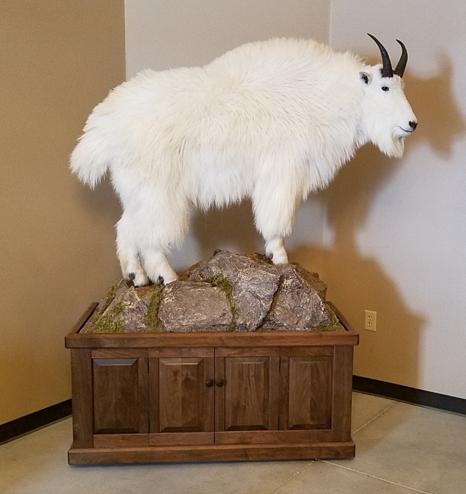 Atcheson Taxidermy Pictures | Atcheson Taxidermy | Mountain Goat